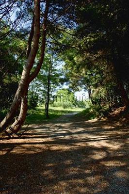 Lerici Hiking Trails